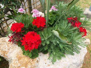 会場敷地内の植栽と色鮮やかな花